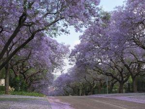 Pretoria 026